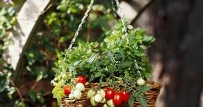 Decoreaza-ti terasa cu legume si verdeturi